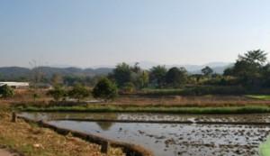Sicht aus dem Tuk-Tuk kurz nach Mae Chan auf dem Weg nach Doi Mae Salong