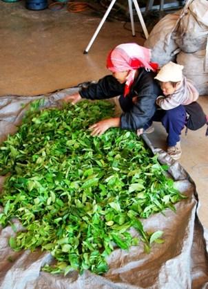 Angehörige eines Bergvolkes mit ihrer Tee-Ernte in Doi Mae Salong