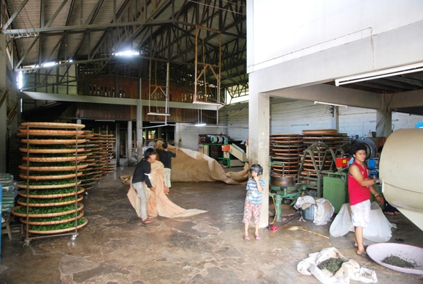Tee-Fabrik in Doi Wawee, Nordthailand
