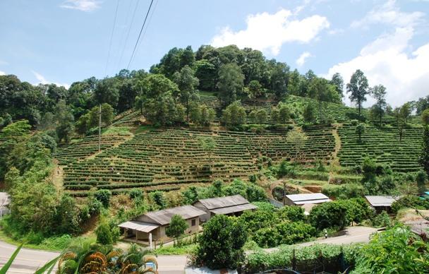 Tee-Hang nahe dem Laolee Resort in Doi Wawee, Nordthailand