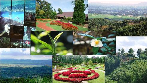Die Tee-Gärten des Doi Tung - Auf den Spuren des Königlichen Entwicklungsprojekts