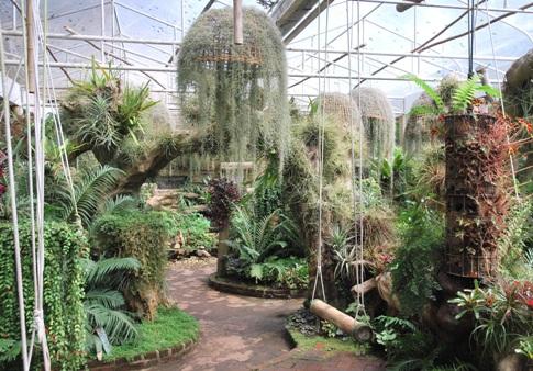 Königliches Entwicklungsprojekt Doi Tung, Royal Flower Garden, Orchideen