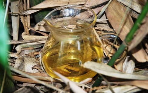 Tie Guan Yin Oolong Tee aus Anxi, Fujian, Gong Fu Cha im Bambusstrauch