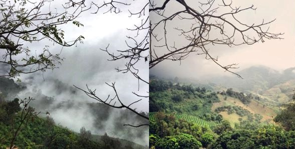 Doi Mae Salong - Teegärten in den Wolken