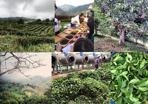 Doi Mae Salong Tee-Schule, erster Kurs November 2014, Collage