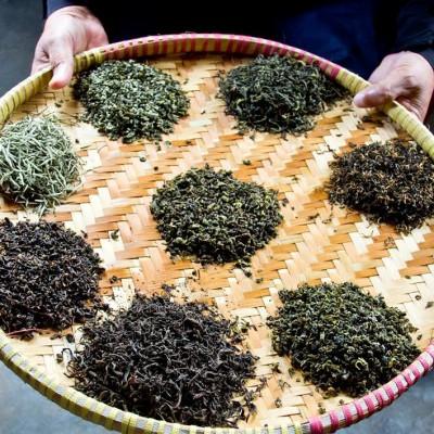 Indische Blattgrade, Pflückstandards und Verarbeitungsstandards für Tee: Von OP bis FTGFOP