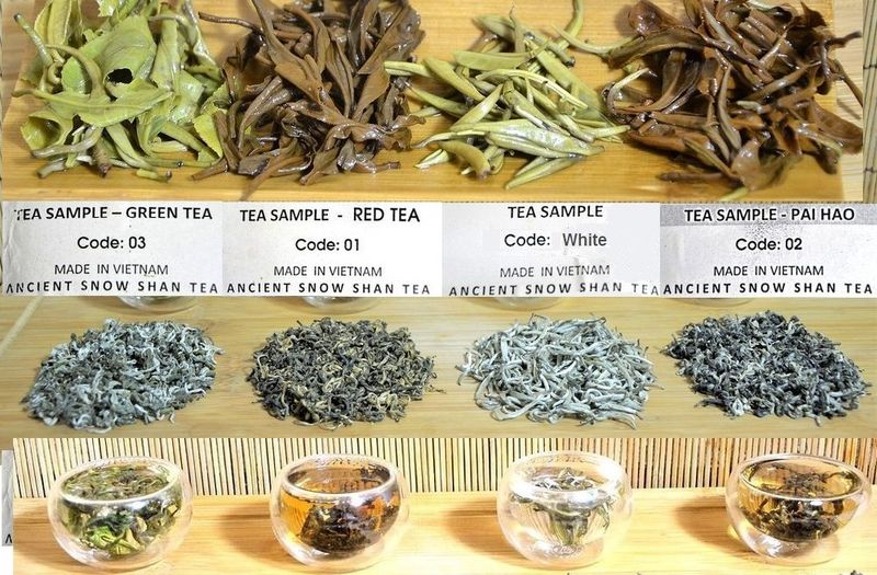 """4 Tees von mehr als 100 Jahren alten """"Snow Shan"""" Teebäumen in der Provinz Ha Giang, Vietnam: grüner Tee, schwarzer Tee, Vietnam Silver Needle, Pai Hao Vietnam Tee"""