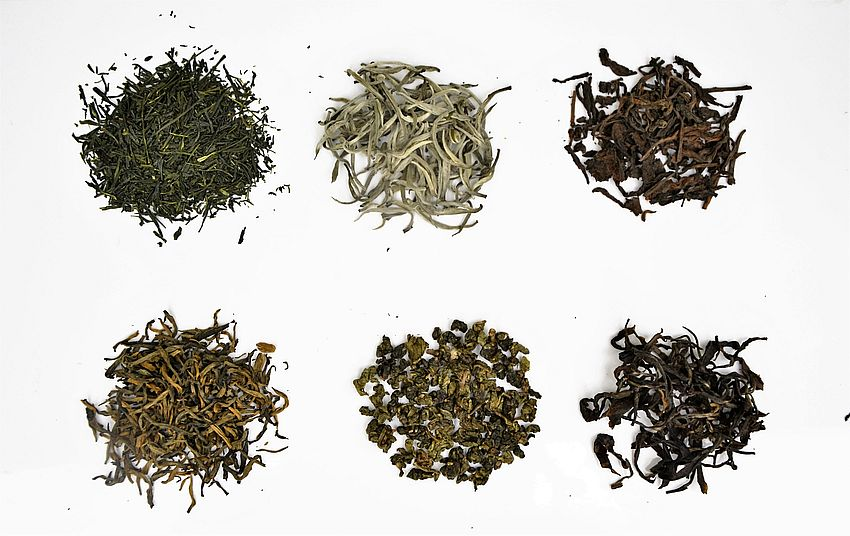 6 Teekategorien - alle von einer Pflanze! (Camellia Sinensis)