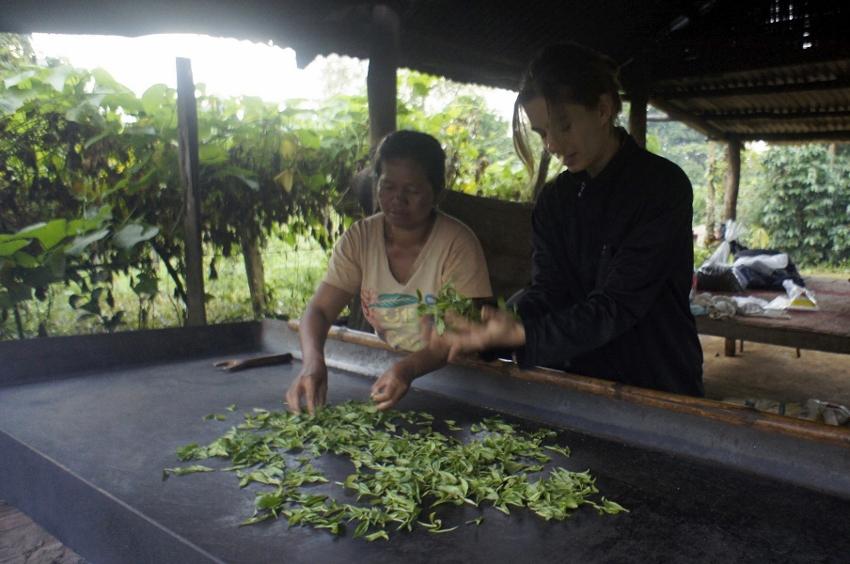 Anna,Phon und die Teeblätter