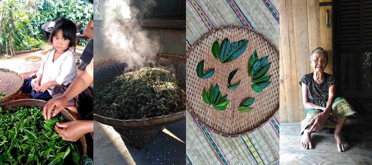 mpressionen aus der laotischen Welt des Tees